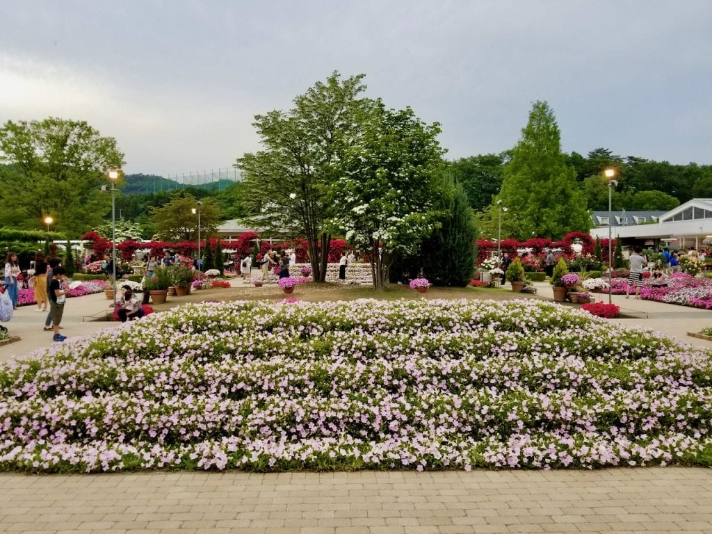 You will find flowers everywhere in Ashikaga Flower Park.