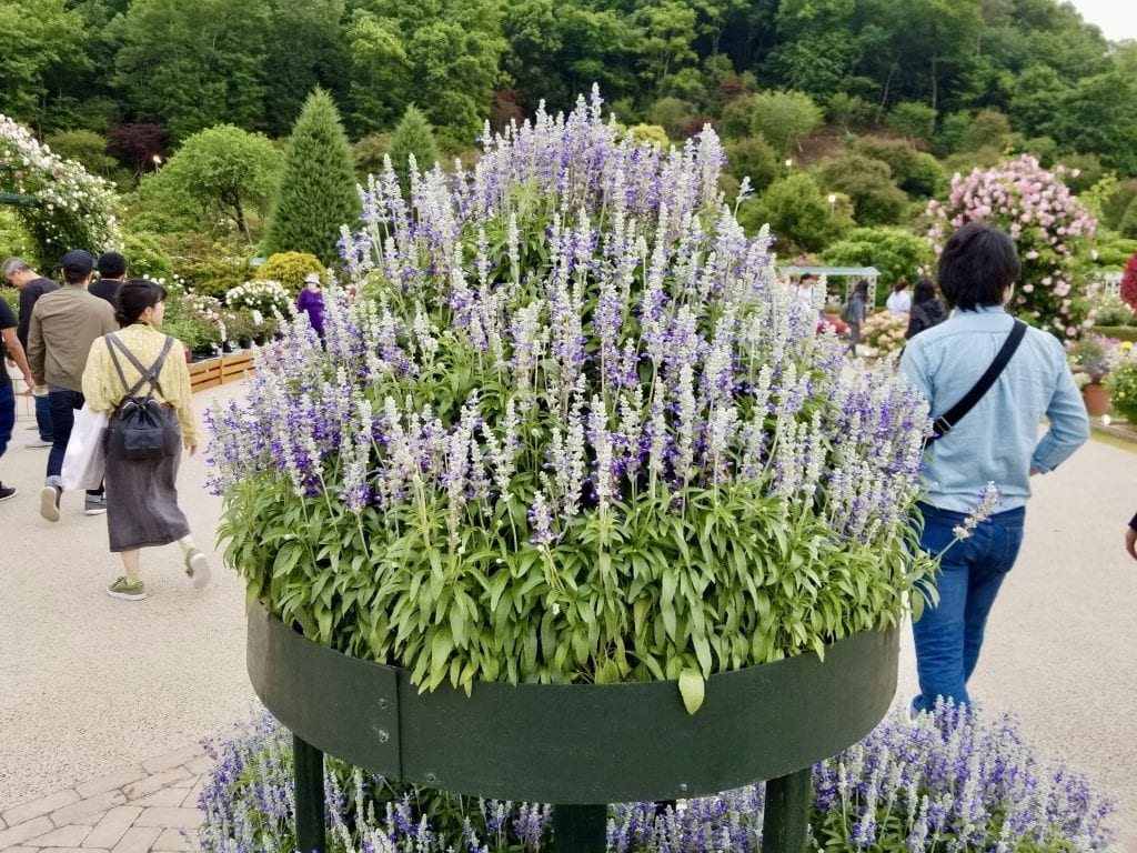 A cake of flowers in Ashikaga Flower Park.