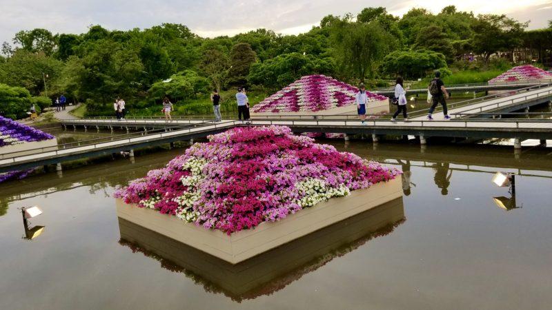Red flower pyramid in Ashikaga Flower Park