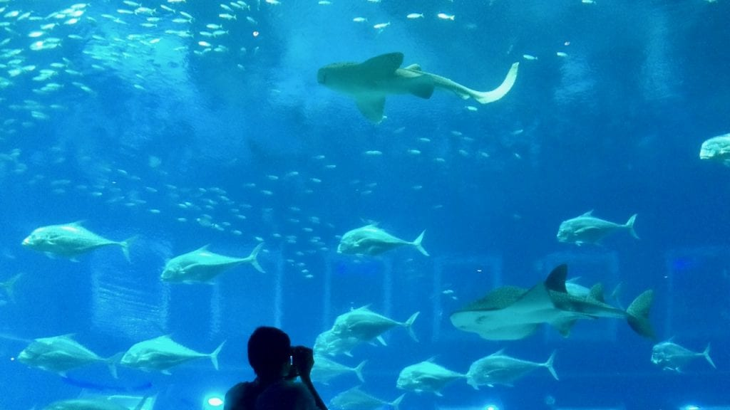 Sharks in S.E.A Aquarium. You must put it on your 4 day Singapore itinerary list.