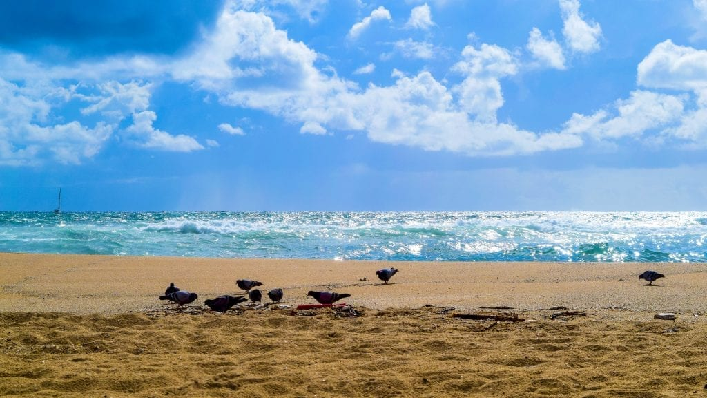 Pigeons are playing in the beaches near Barcelona.