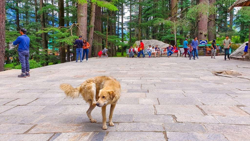Hadimba Devi Temple Terrace. This is a good place to visit in Manali.