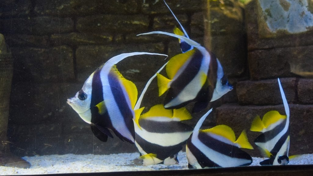 Colorful fish in underwater aquarium - Langkawi itinerary