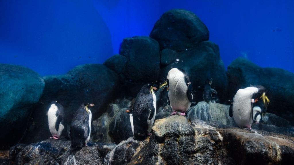 Penguins in Langkawi Underwater World