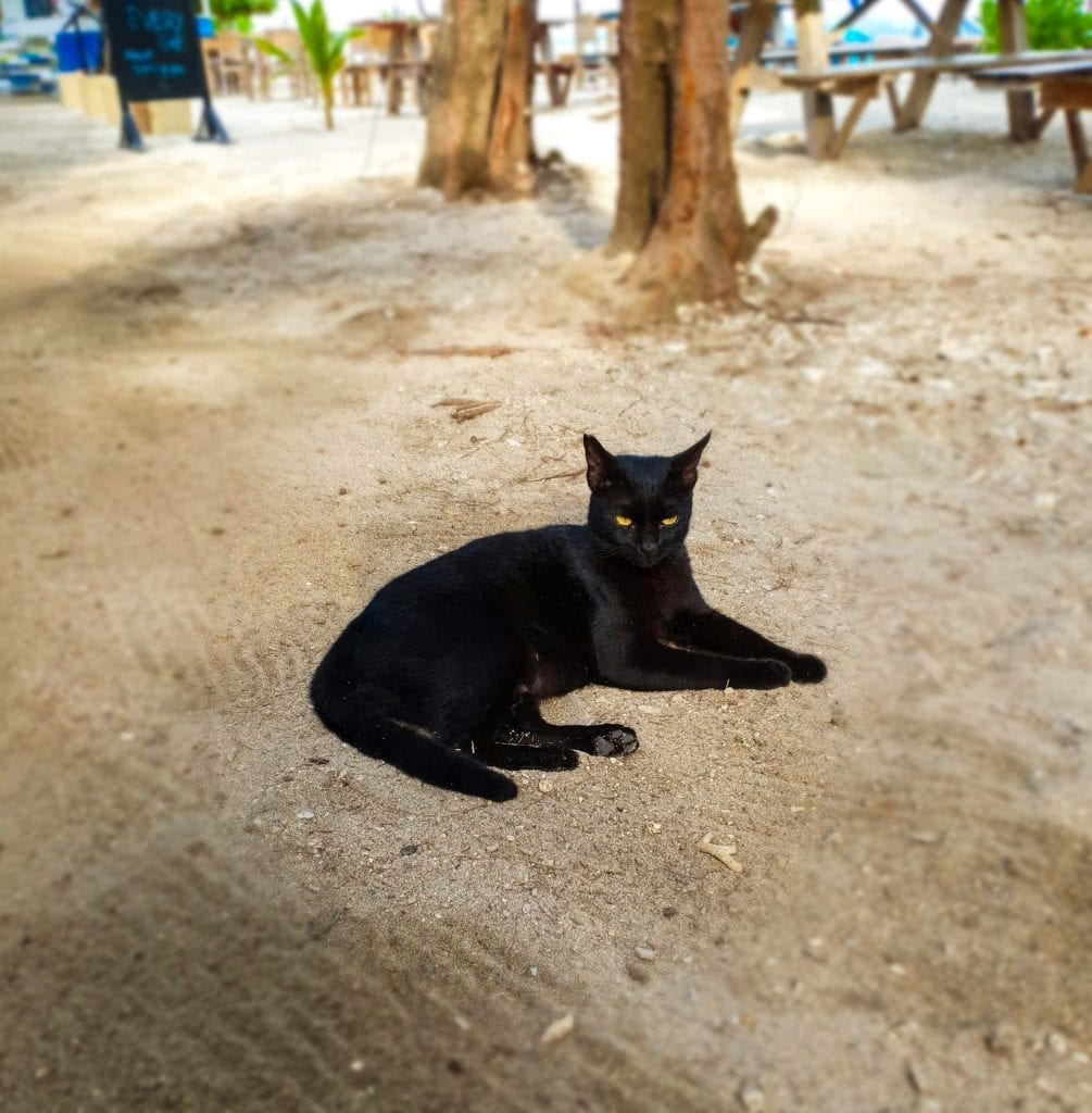 A Cat in Gili Air