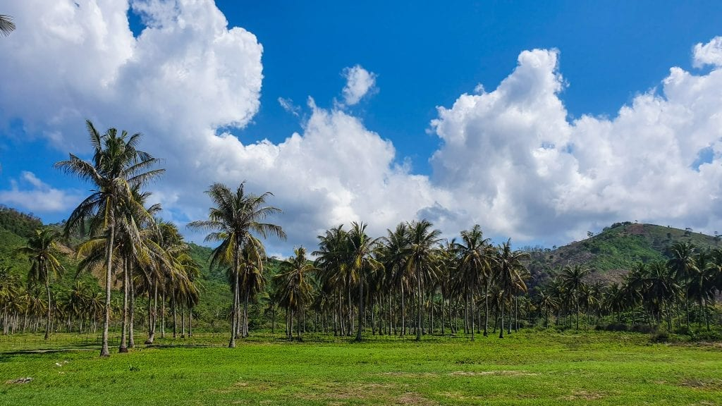 Roadside view of Sekotong with coconut trees