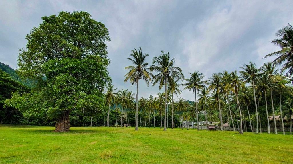 Greeneries and Landscapes in Senggigi
