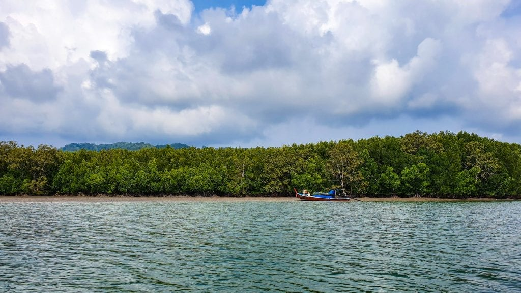 Tung Yee Peng Mangrove in Ko Lanta