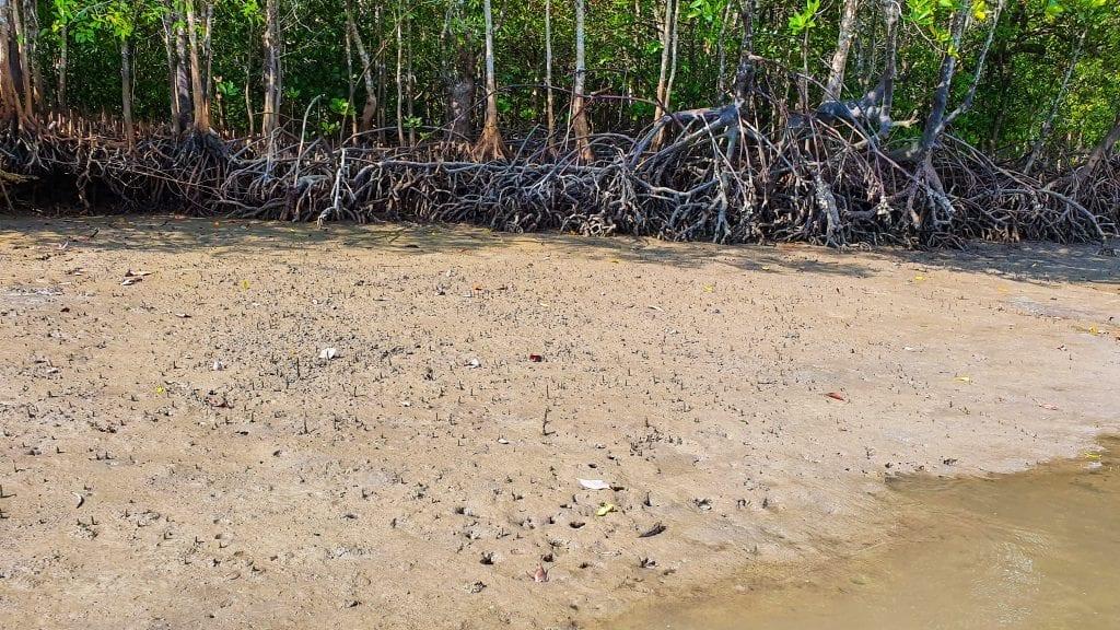 Tung yee peng mangrove forest