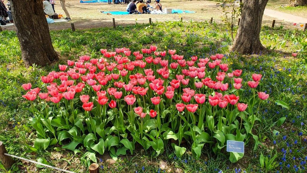 Flowers in Maruyama Park