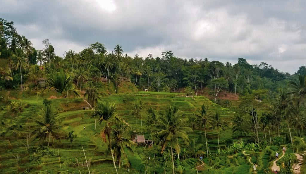 Rice Terraces in Ubud is a UNESCO World Heritage Site