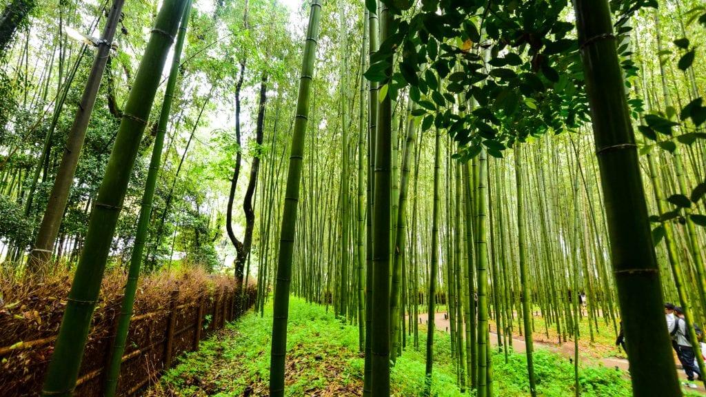 Arashiyama Bamboo Garden - 3 Day Kyoto Itinerary