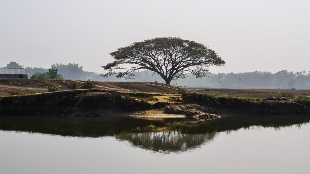 Beautiful Tree in Birishiri