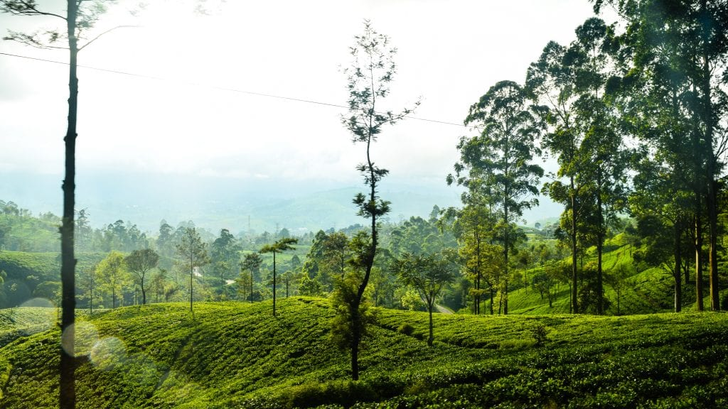 Closer Look at the Tea Garden of Sri Lanka