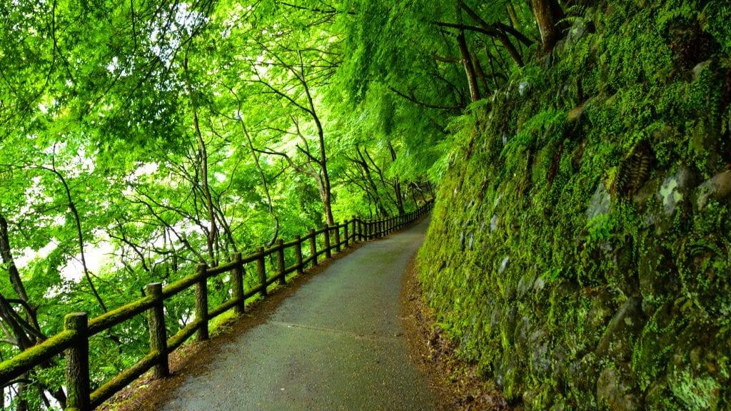 Kyoto Nature Trail in Arashiyama