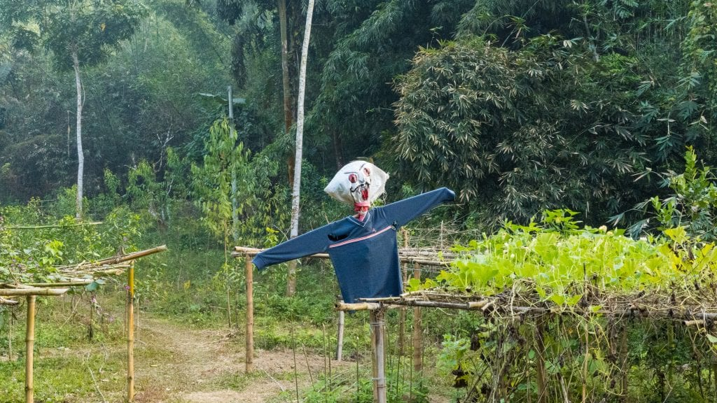 Scarecrow in Bangladesh for scaring crows