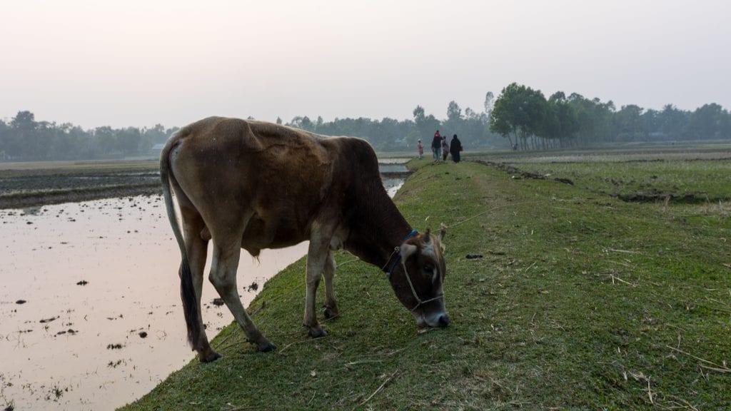 Typical Village in Bangladesh - Birishiri