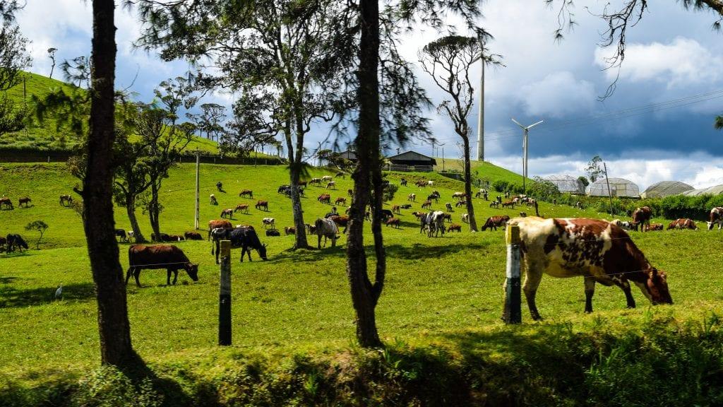 Ambewela Farm in Sri Lanka