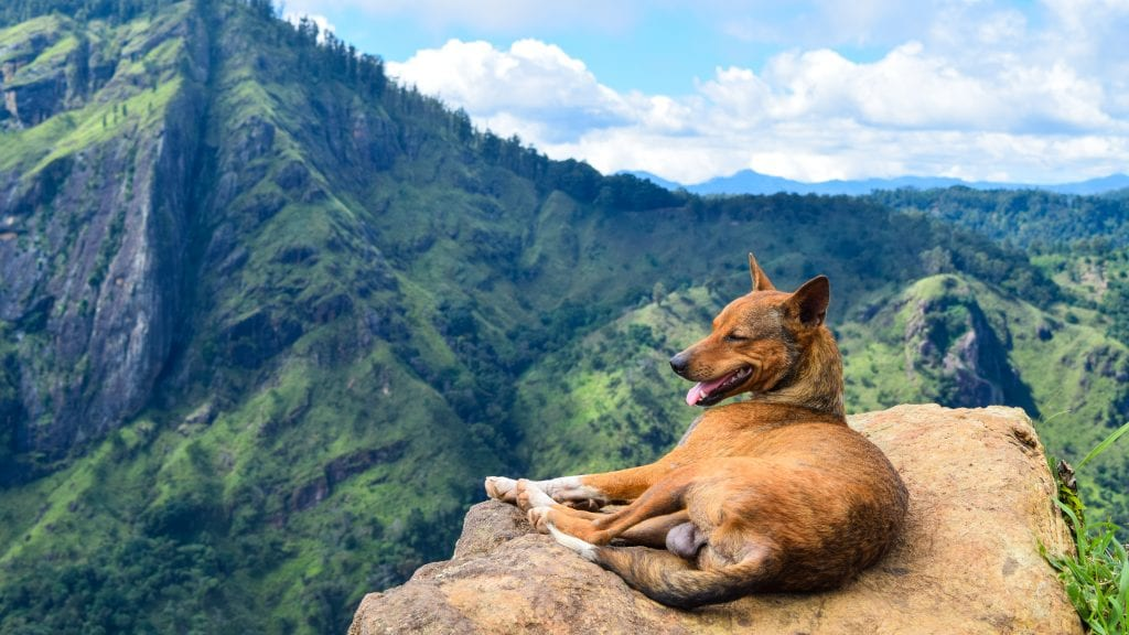 Dog on Top of little Adam's Peak