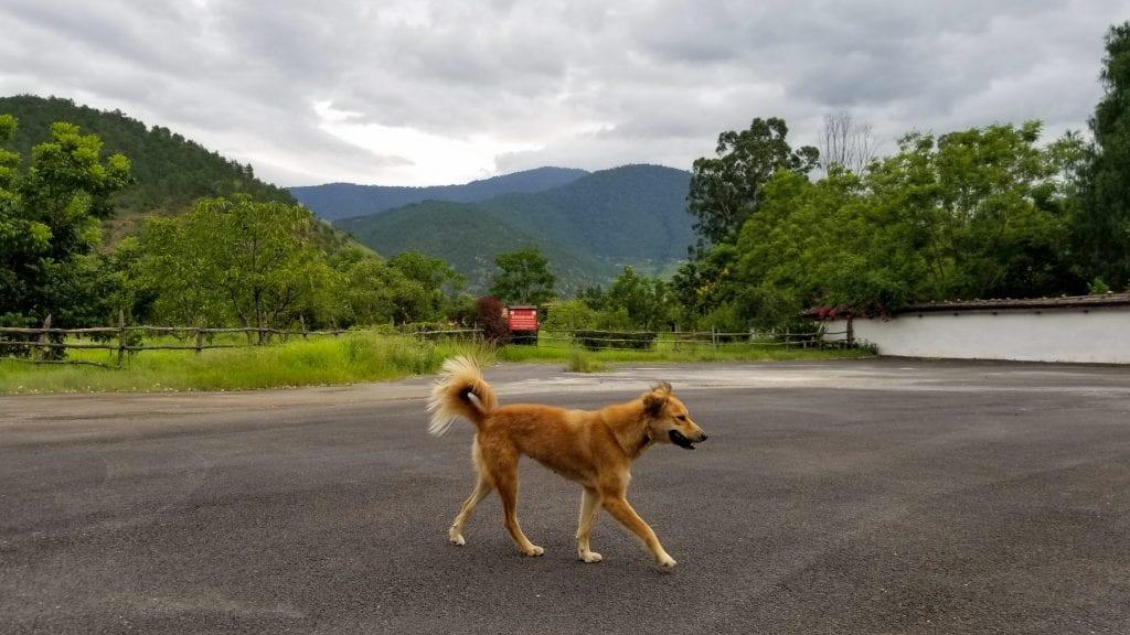 Dog Photography in Punakha