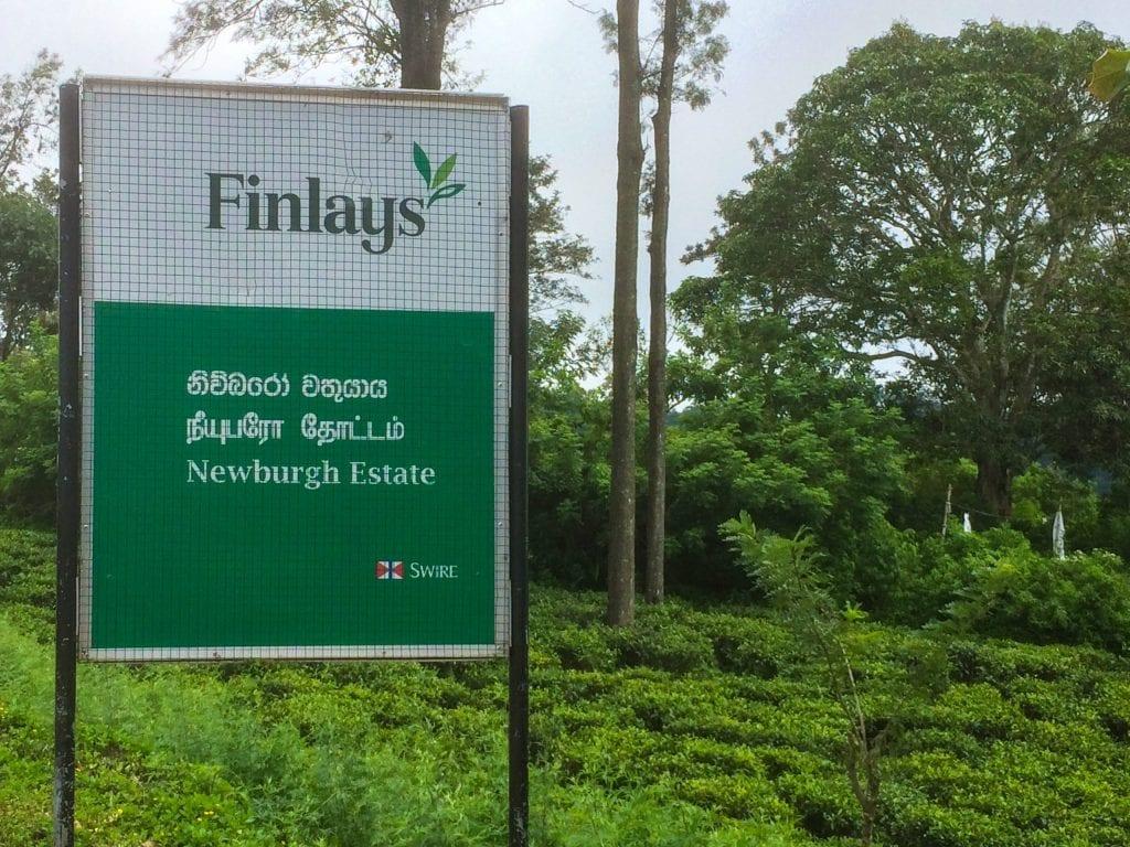 Finlays Newburgh Estate in Sri Lanka