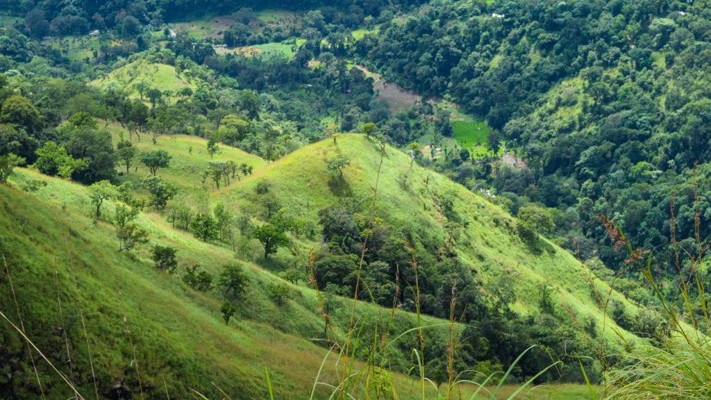 Greeneries at Little Adam's Peak, Ella
