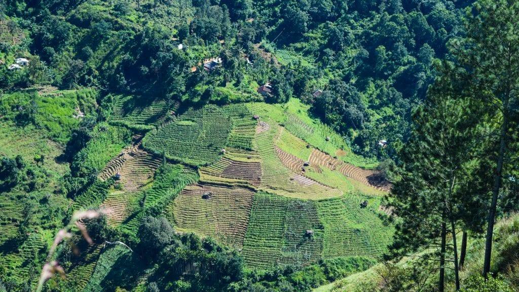 Ricr Field seen from the Little Adam's Peak