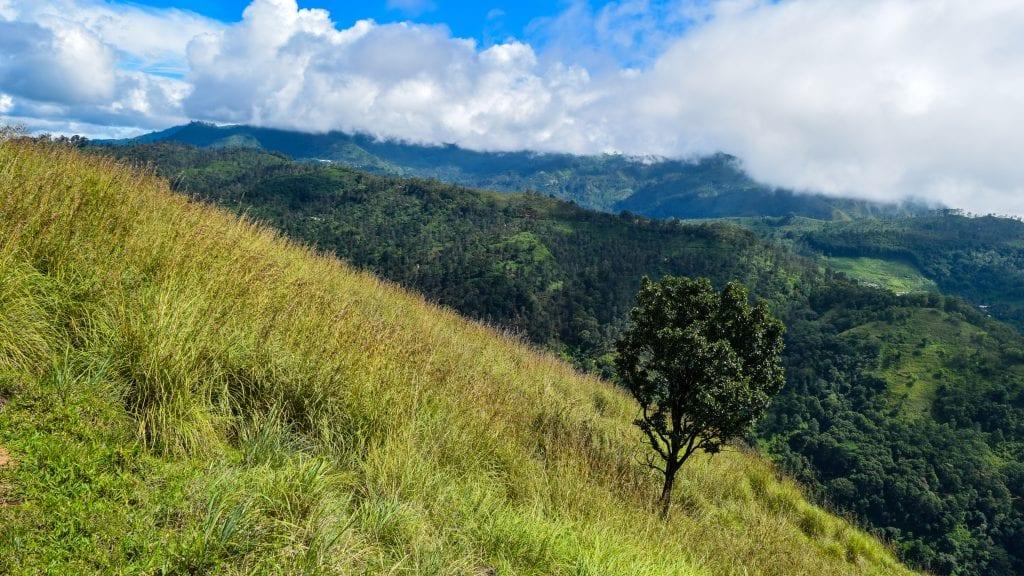Tree in Little Adams Peak, Sri Lanka