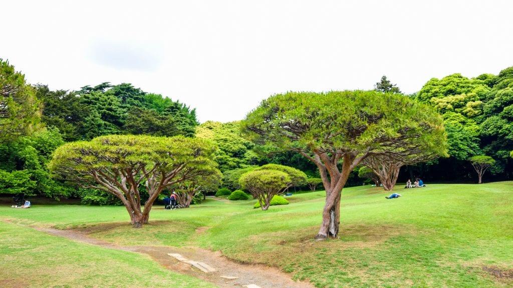 Trees in Shinjuku Gyoen National Garden