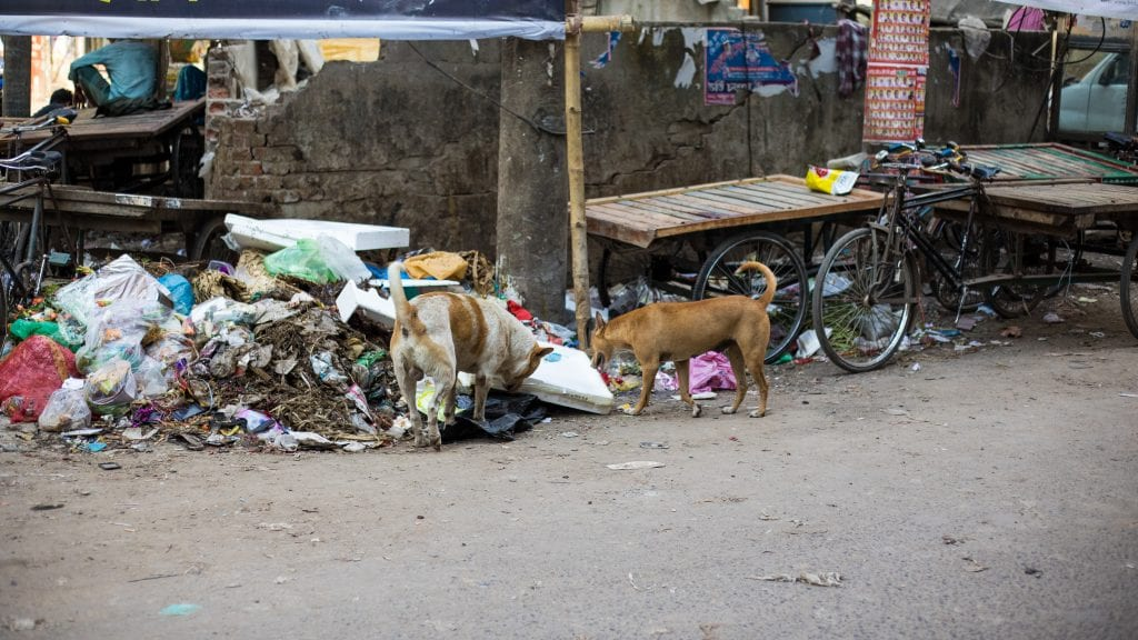 Stray Dogs in Old Dhaka - Old Dhaka in Photos