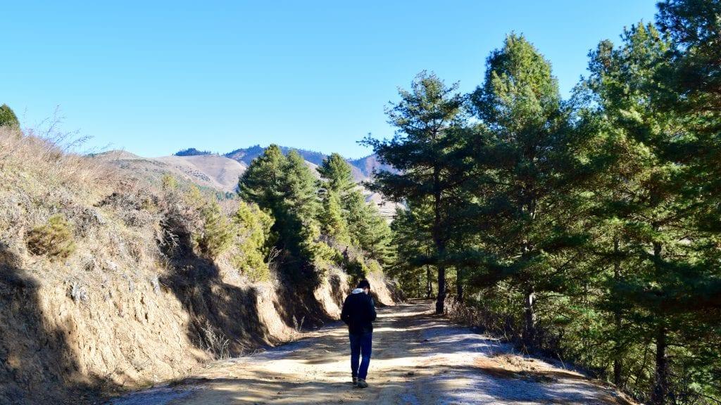 Walk through the Pine Forest