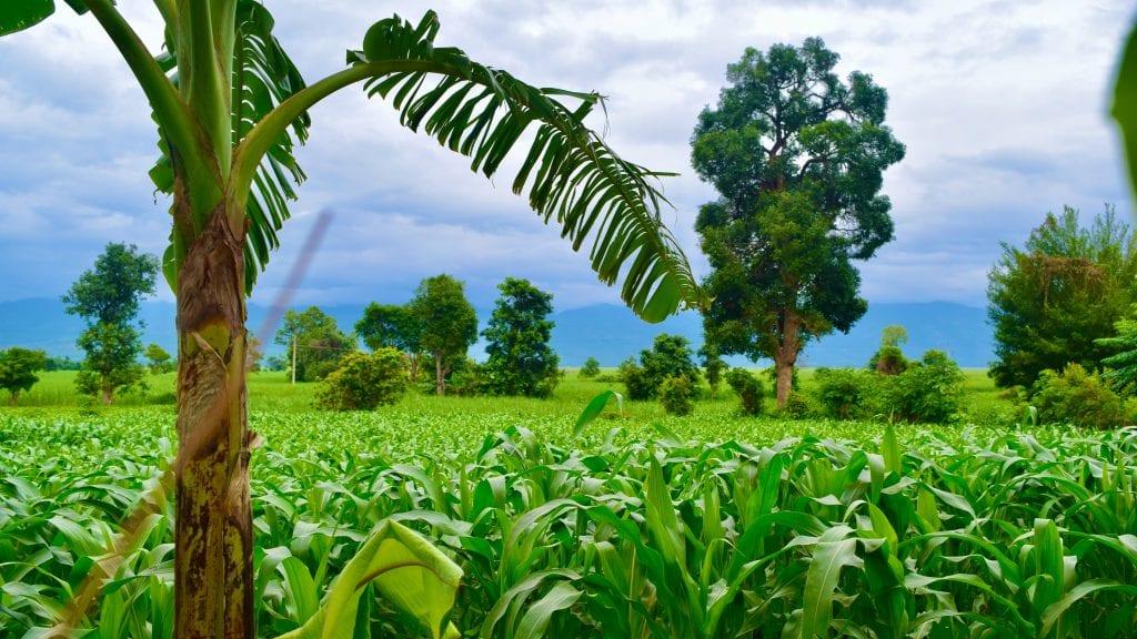 Green Nyaung Shwe in Myanmar